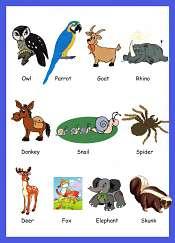 Animals Picture Vocabulary