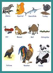 Animals Vocabulary With Pictures