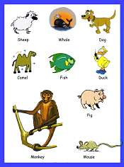 Animals Vocabulary 5