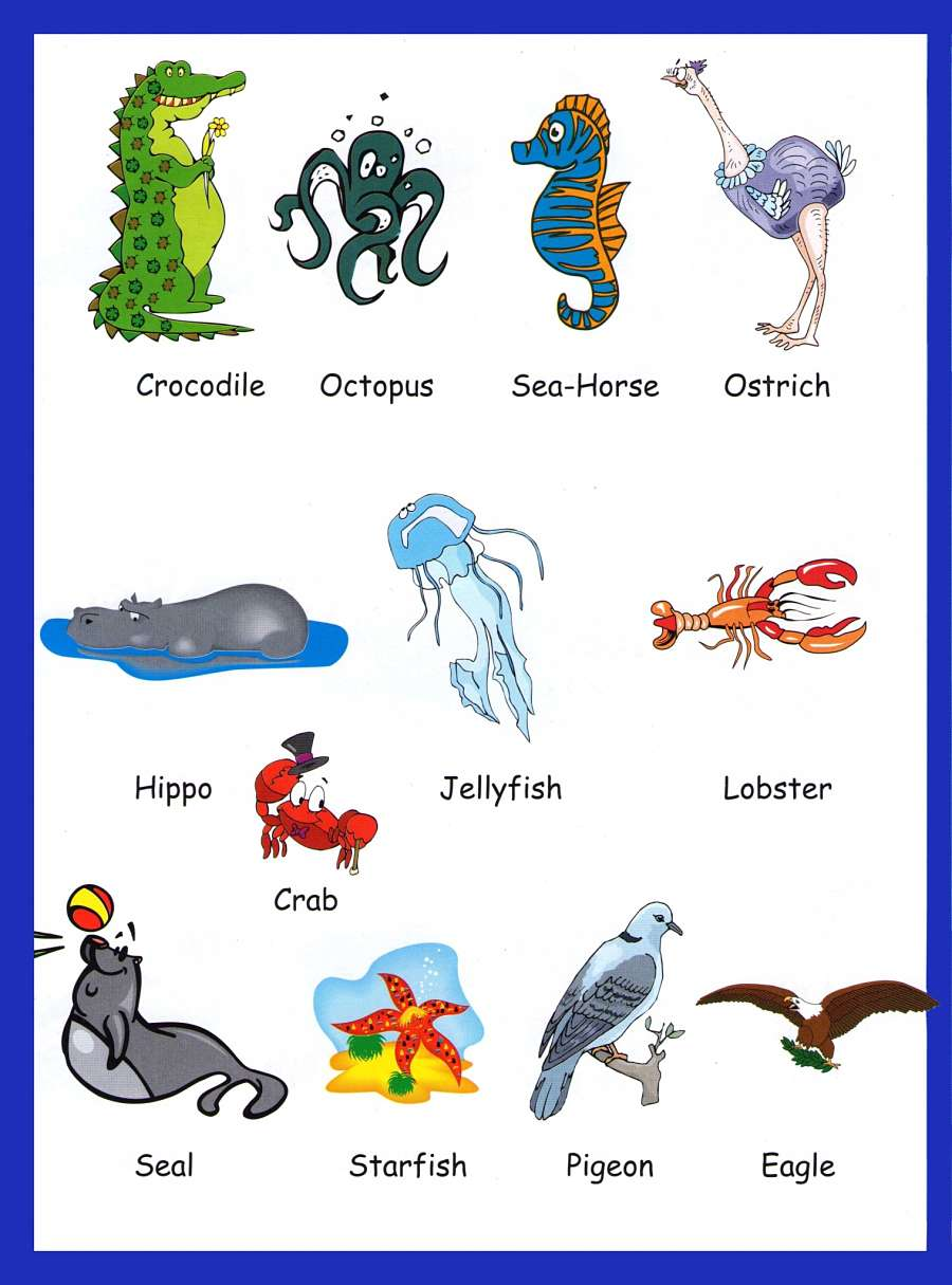 Animals Picture Vocabulary 6