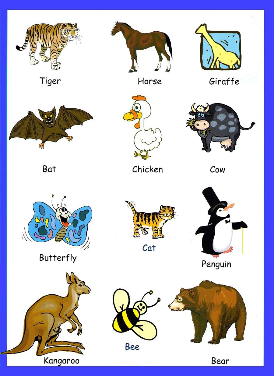 animals children vocabulary - Pics Of Animals For Kids