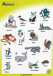 Animals Vocabulary 8