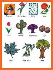 Les Plantes et Les Fleurs en Anglais