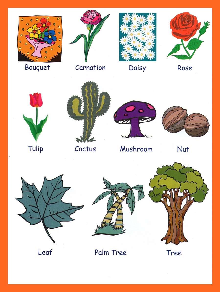 ESL Picture Vocabulary - GrammarBank