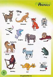 Animals Vocabulary 7