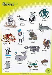Animals Vocabulary 8